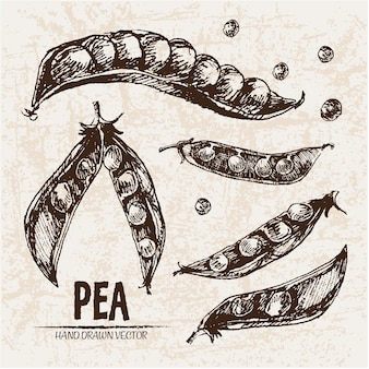 Hand drawn pea collection
