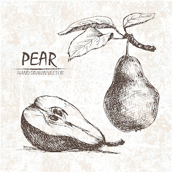 Hand drawn pear design