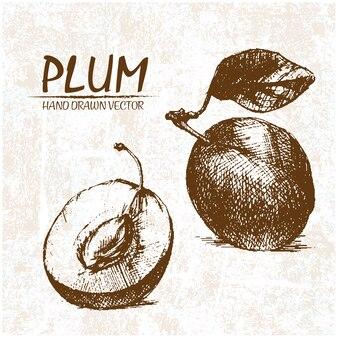 Hand drawn plum design