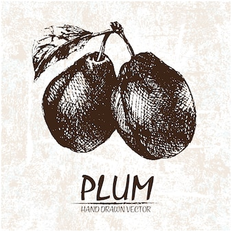 Hand drawn plums design