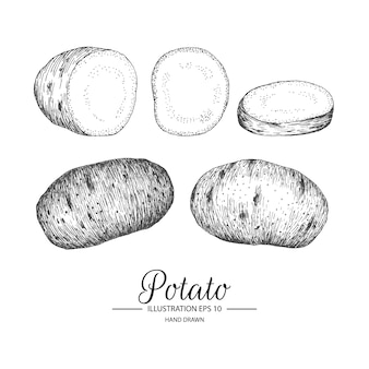 Hand drawn potato collection
