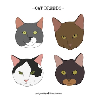 Hand drawn realistic cat breeds