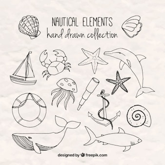 Hand drawn salor elements