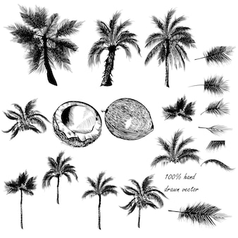 Hand drawn tropical elements collection