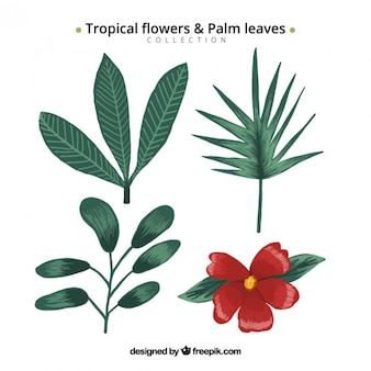 Hand drawn tropical flowers and palm leaves set