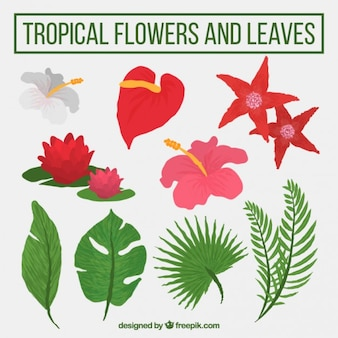 Hand drawn tropical flowers and plant