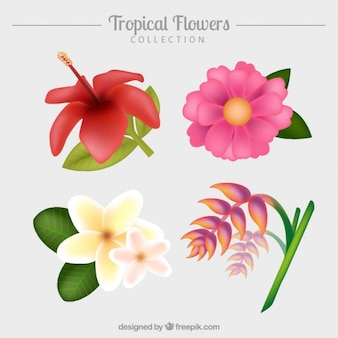 Hand drawn tropical flowers pack