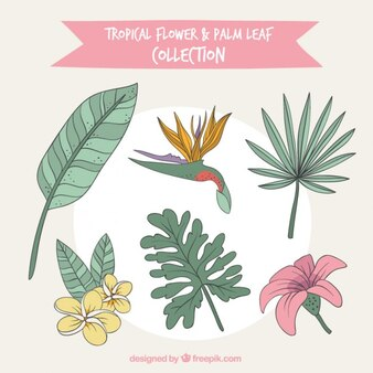 Hand drawn tropical flowers set