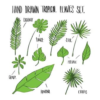 Рисованные растения тропических листьев, вектор иллюстрации для инфографики или других целей.