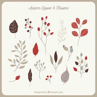 Hand drawn variety of autumnal leaves