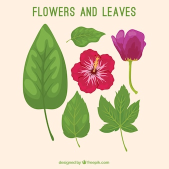 Hand drawn variety of leaves and flowers