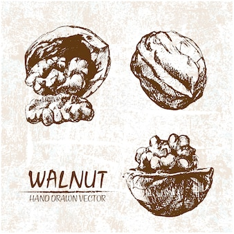 Hand drawn walnuts design