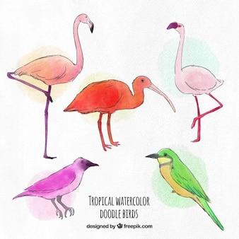Hand drawn watercolor exotic birds