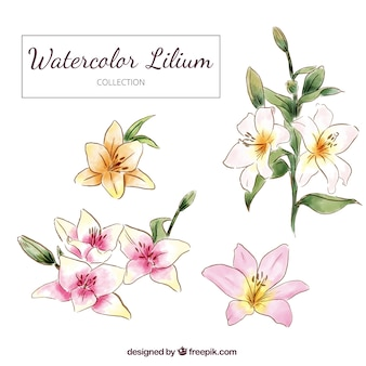 Hand drawn watercolor lilium flowers