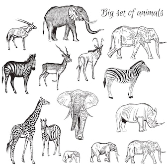 Hand drawn wild animals collection