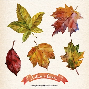 Hand painted autumn leaves collection