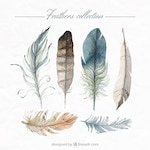 Hand painted feathers collection