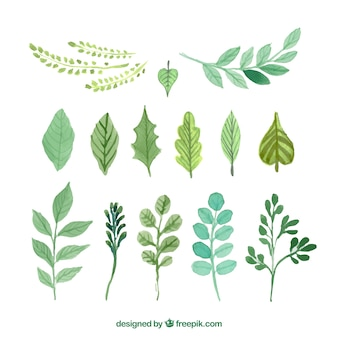 Hand painted green leaves