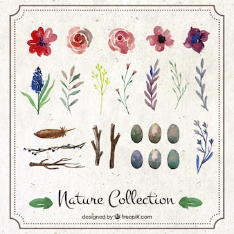 Hand painted nature collection