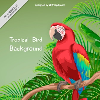 Hand painted parrot and palm leaves background