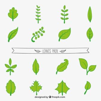Handawn Leaves Set
