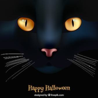 Happy halloween background with black cat