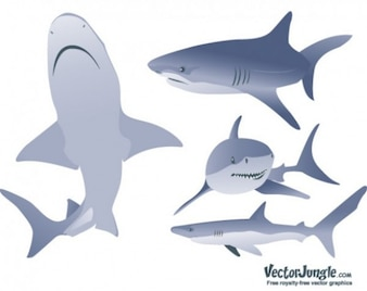 high quality modern shark vector graphics