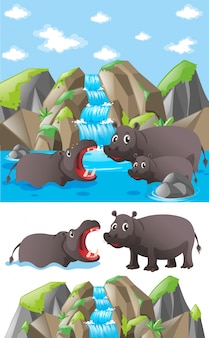 Hippo family at the waterfall