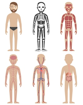 Human anatomy designs