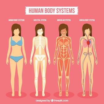 Human body sistems pack