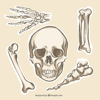 Human Bones Collection