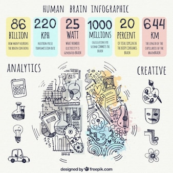 Human brain infographic with hand-drawn items