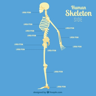 Human skeleton profile