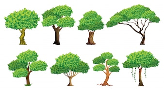 Illustration of a set of many trees