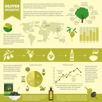 Infographic template about olive oil