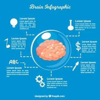 Infographic template of brain in flat design
