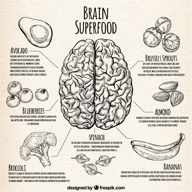 Infographic with the best food for the brain