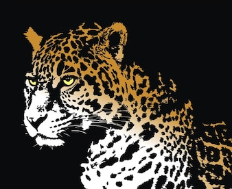 Jaguar with black background