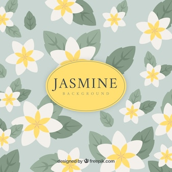Jasmine background with flat design