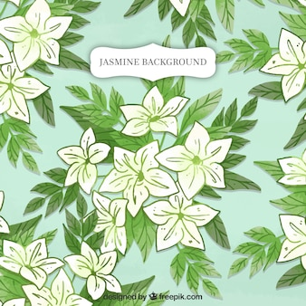 Jasmine background with hand drawn leaves