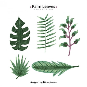 Kind of leaves pack