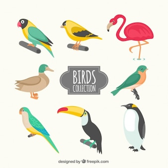 Kinds of birds collection