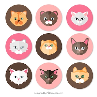 Kinds of cats pack