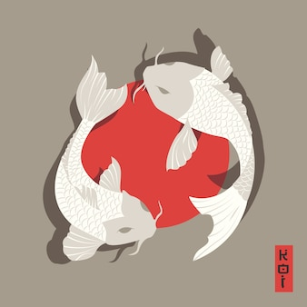 Koi background design