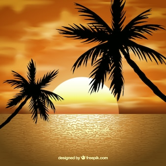 Landscape with palm trees at sunset