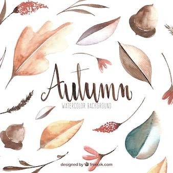 葉、ドングリ、秋、水彩