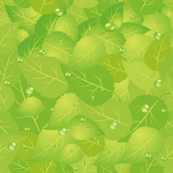 Leaves with Dew Drops Background