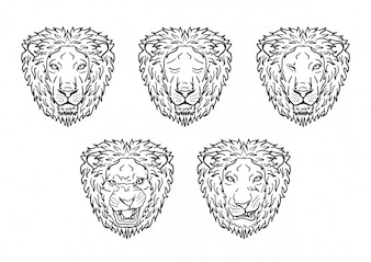 Lion heads collection