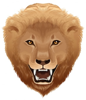 Lion illustration - species Pathera leo