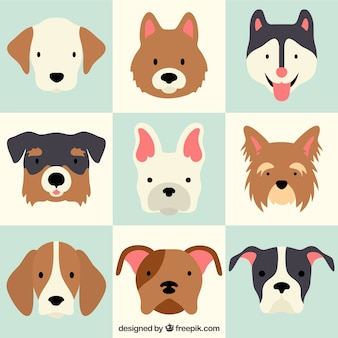 Lovely dog breeds